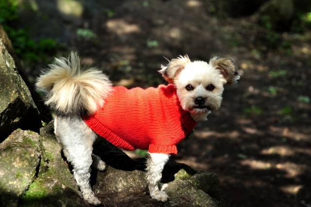Dog Jumpers 036