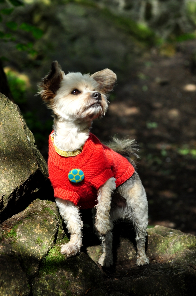 Dog Jumpers 041